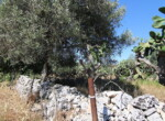 Te renoveren boerderij te koop in Sicilie 6