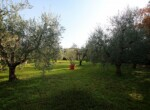 Pisa - Gerenoveerde villa in Toscane te koop 4