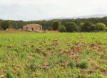 Huis te koop tussen Volterra en San Gimignano - Toscane 4