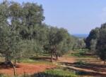 Carovigno terrein olijfbomen zeezicht te koop Puglia 1