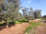 Carovigno terrein olijfbomen zeezicht te koop Puglia 10
