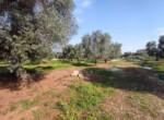 Carovigno terrein olijfbomen zeezicht te koop Puglia 12