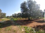 Carovigno terrein olijfbomen zeezicht te koop Puglia 13