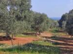Carovigno terrein olijfbomen zeezicht te koop Puglia 2