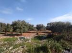 Carovigno terrein olijfbomen zeezicht te koop Puglia 8