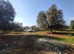 Carovigno terrein olijfbomen zeezicht te koop Puglia 9