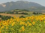 Farmhouse-cagli-marche-italy-garden-girasoli