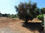San Vito dei Normanni af te werken villa in Puglia te koop 10